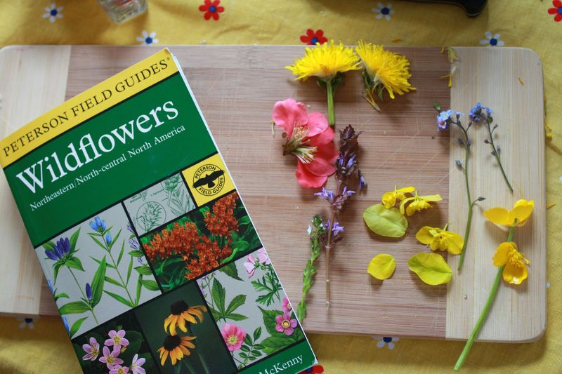 Wildflowers 101