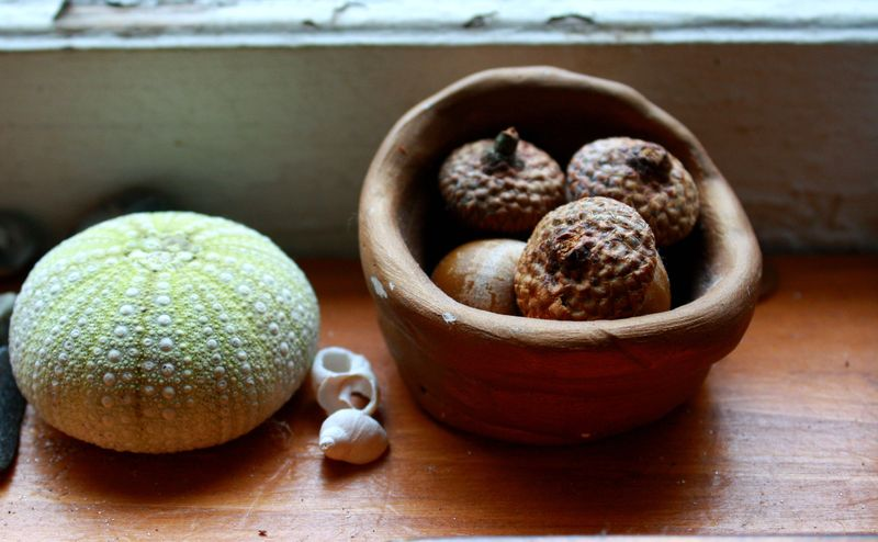 Acorns on the sill