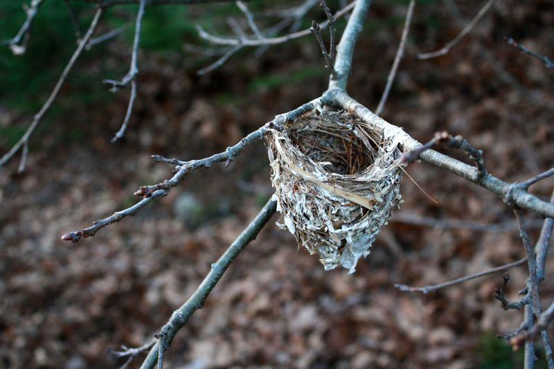 Nest fall 1P