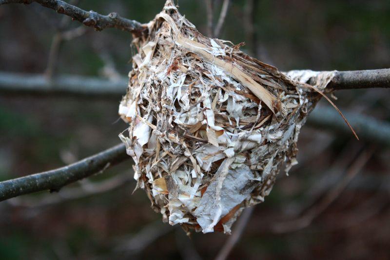 Nest fall building materialsP