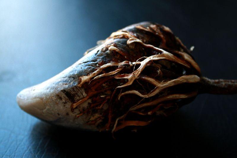 Seaweed hold P