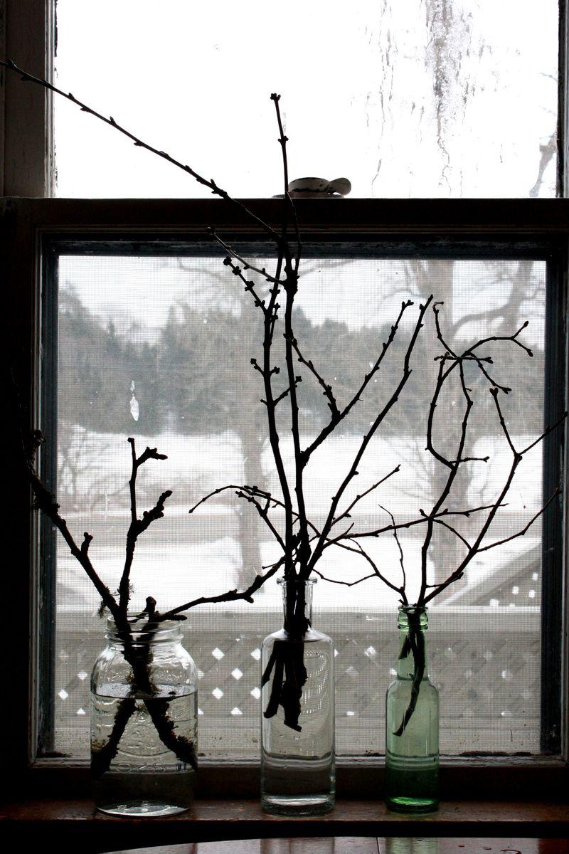 PBud Project Window
