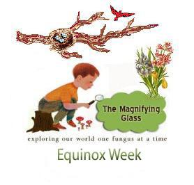 Equinox Week