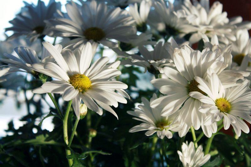FlowersCP