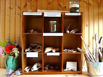 Display for nature walk finds