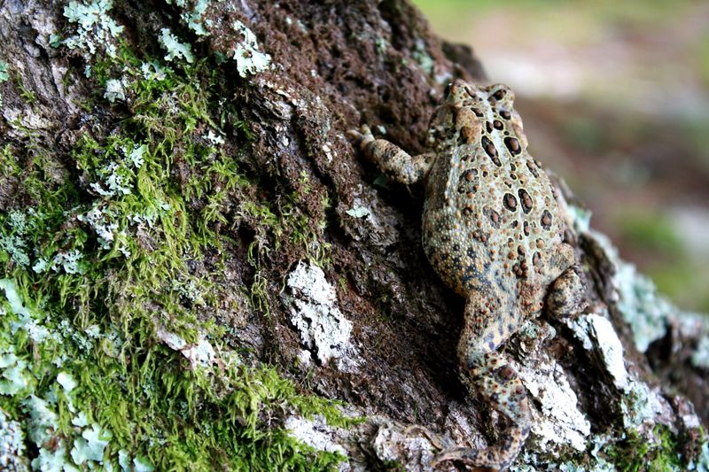 Z toad tree