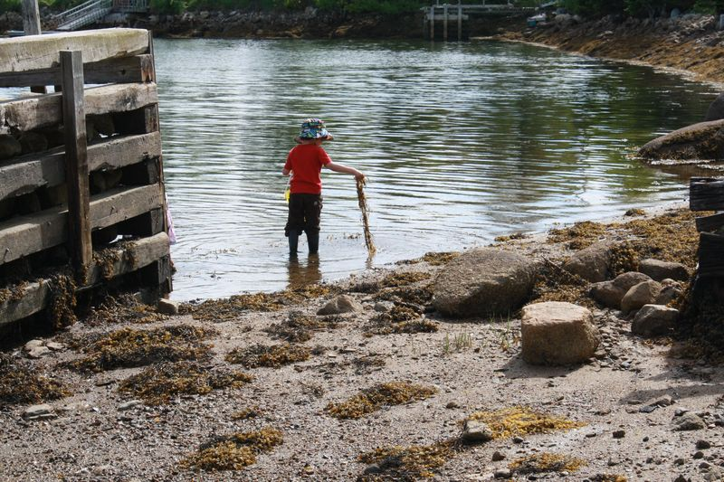 Collecting seaweed