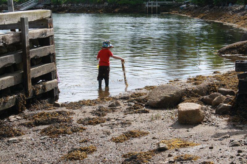 Collecting seaweed