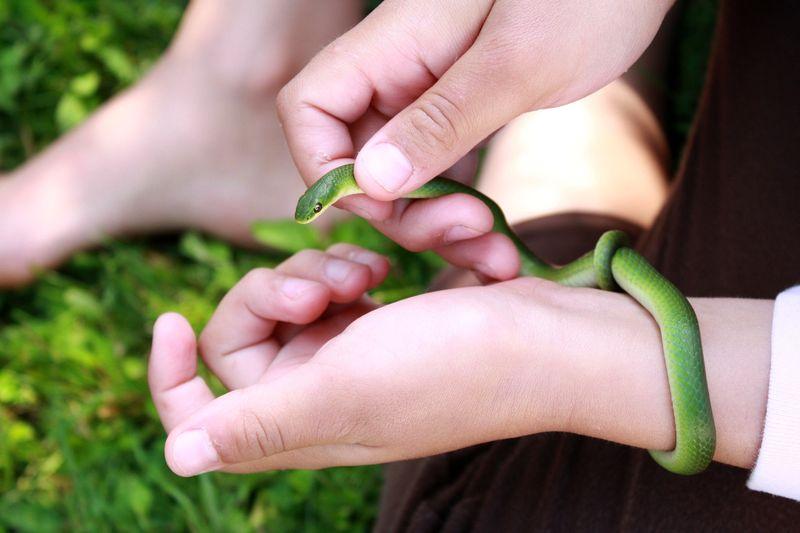 Zgreen snake 3 wrist