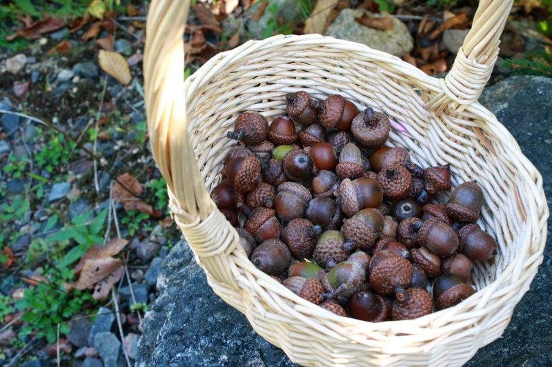 Z Basket of acorns