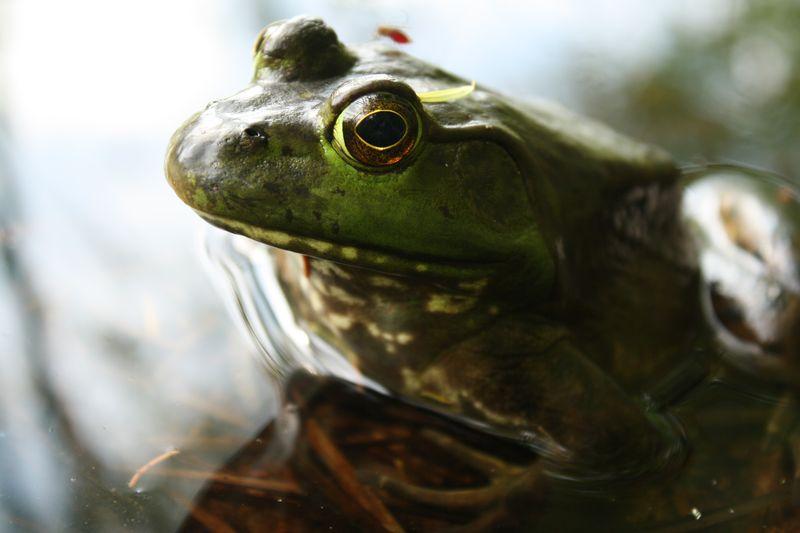 Close up Froggy